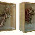 Körpergewebe/2000/ 22 x 30 x 12 cm/ Holz; Bindfaden; Nadeln; Zeichnung; Plexiglas