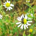 Quelle: Bienen & Umwelt