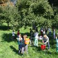 Apfelernte mit einer Schulklasse im Siebengebirge