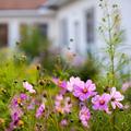 Blumenmeer & Blütenmärchen