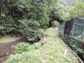 右側の小屋葉ワサビの栽培してました