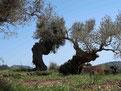 Wanderwoche Mallorca