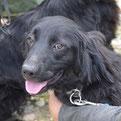 Sibila - Die kleine Hundedame hat ihr Zuhause... :-)