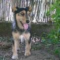 Upi (von Vesna) wurde entdeckt und hat ihr Zuhause :-)