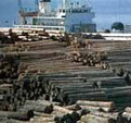 Wood Yard