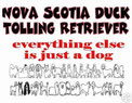 Nova Scotia Duck Tolling Retriever, was sonst?
