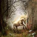 Einhorn Fantasy