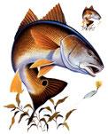 peche des poissons blanc