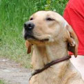 Vita ist entdeckt und lebt mit ihrer Familie in Südniedersachsen :-))