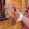 Alf wurde ganz sehnsüchtig erwartet und hat sein Körbchen bezogen... :-)