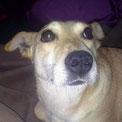 Dina ist entdeckt und teilt ihr Glück mit Bongo :-)