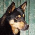 Indigo lebt mit seiner Foxy in einer Familie - soooo schön!!! :-)