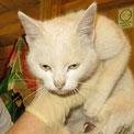 Katze Helenas Zuhause ist bei Hannover... :-)