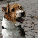 CHICCO ist glücklich :-))