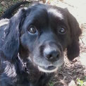 Oscar eroberte die Herzen seiner PS so sehr, dass sie ihn adoptierten. :-))