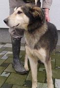 Hak lebt mit einer Hundefreundin im Glück