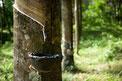 lattice naturale materassi materasso sfoderabile ferrara manifattura falomo