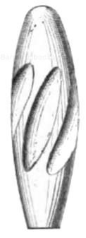 Eiförmiges Spitzgeschoss mit prismatischem Führungskörper (für Whitworth Geschütze)