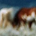 verschwommene Pferde