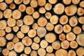in Holz investieren? – Unser Tipp: Holzinvestment in Deutschland