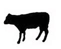 Morceaux de cuir de veau