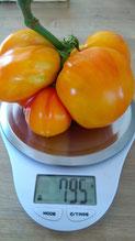 Riesentomate Ananas: Große, runde, gelbe Früchte mit Einkerbungen.Bio Gärtnrei Kirnstötter