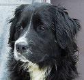 Benny lebt jetzt mit Hundekumpels zusammen