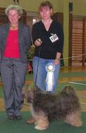 BOB Gosen 2013 Tibet Terrier Habakuk-Tibatong's O'Kirana