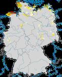 Karte zu den Brutvorkommen der Silbermöwe (Larus argentatus) in Deutschland.