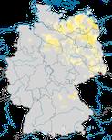 Karte zu den Brutvorkommen des Waldwasserläufers (Tringa ochropus) in Deutschland.