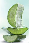 Coupe de feuille d'Aloe vera : cliquez pour découvrir nos boissons aloe vera vitales
