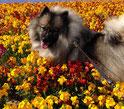 unser Blumenmädchen