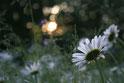 Romantische deko, Wanddeko, Blumen, sonnenuntergang, Foto, Foto bestellen, postkarte