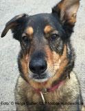 Hundeportrait, Foto: © Helga Guder, CLF Mobile Hundeschule