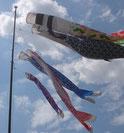 住宅地の中で、一際目立つ 鯉幟旗