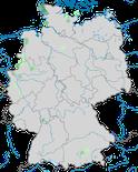 Karte zur Verbreitung der  Weißwangengans (Branta leucopsis) in Deutschland während der Brutzeit