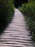 Weg aus Holz, Weg ins Leben, Sinn des Lebens, Neue Wege gehen