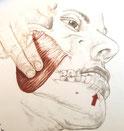 ●夜間の食いしばり・歯ぎしり・噛みしめ