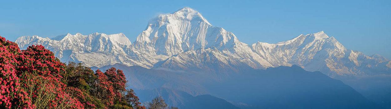 Lodge-Trekking in Nepal zwischen Annapurna und Dhaulagiri