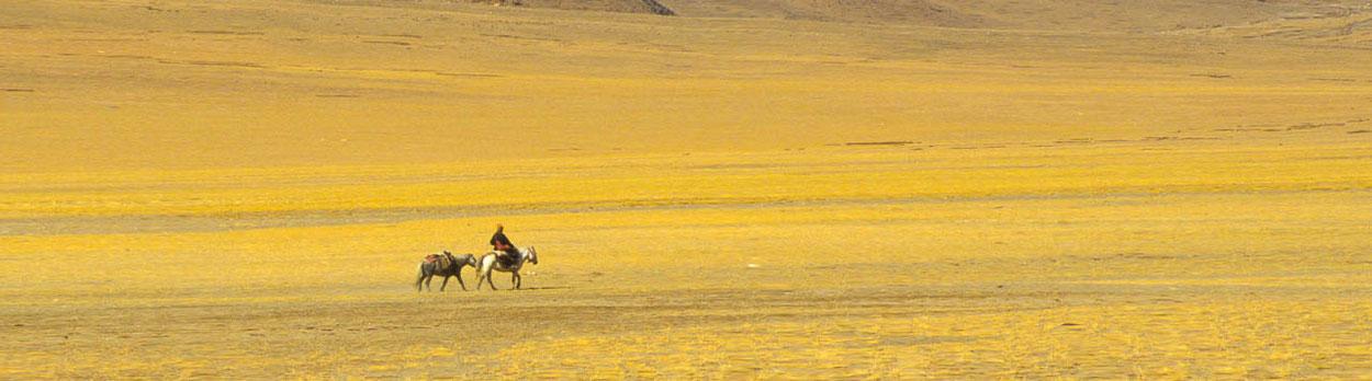 Nomade auf dem Changthang Hochplateau in Ladakh