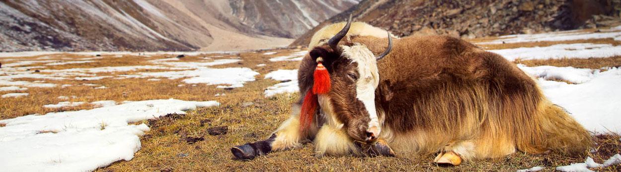 Great Himalaya Trek in Bhutan