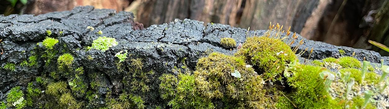 Erholung statt Stress mit Waldbaden