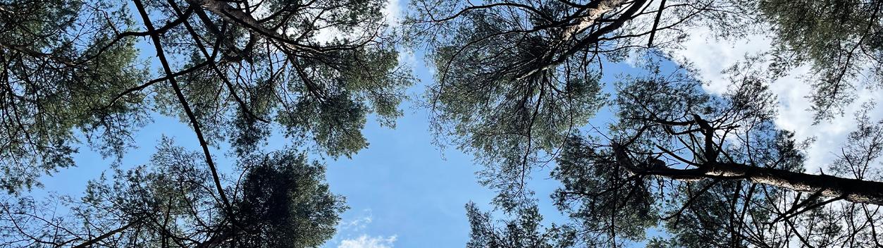 neue Energie tanken, Leistungsfähigkeit steigern durch Erholung im Wald
