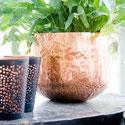 Pflanzen u. Gefäße