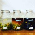 梅酒、ブランデー梅酒、黒糖梅酒、自家製果実酒