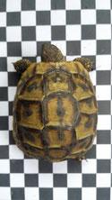 Karopapier für Schildkröten Fotodokumentation