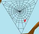 hoe maakt een spin een web
