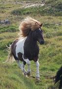 Skjoni in Island