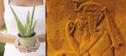 L'Aloe Vera, son histoire, les composants comme l'acemannan en résumé et en vidéo