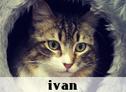 Ivan, La Gatoteca, Cat Café